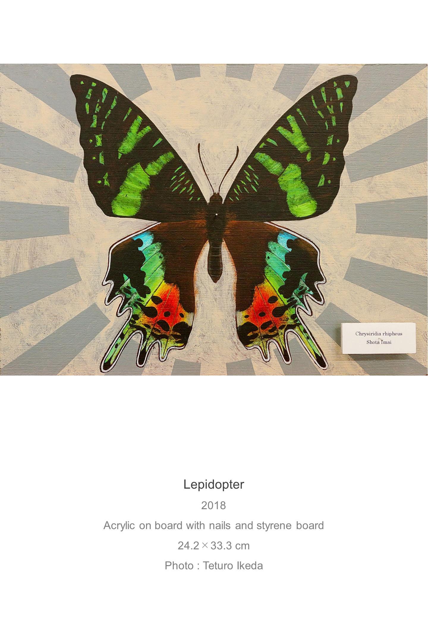 Shota Imai's Artwork of Lepidopter